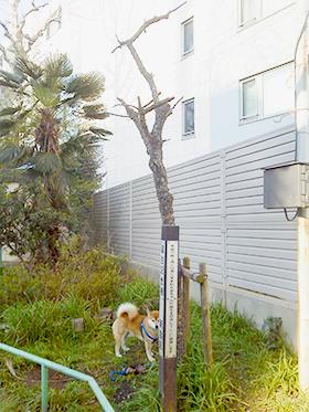 (5)ラッキーと記念樹