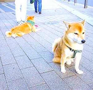ラッキーと恋人ピース(奥)