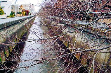 石神井川。その水利をめぐって戦国期から多くの争いが続いた
