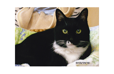 猫が主役の竹本一家(6)最期の日々そして別れ(2)ペロと五郎 たけもとのぶひろ – 月刊極北