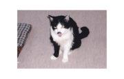猫が主役の竹本一家(4) ペロ家出事件顛末記2 たけもとのぶひろ – 月刊極北