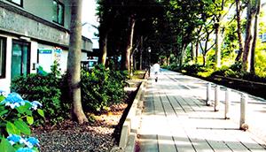 大宮氷川神社の参道