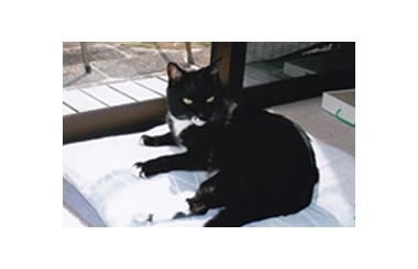 猫が主役の竹本一家(1) 猫ファミリーの誕生――東京編 たけもとのぶひろ – 月刊極北