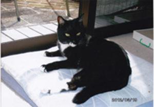 五郎(2012年3月、16歳位)