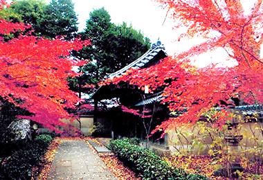 広徳寺(練馬区桜台)。紅葉が美しい