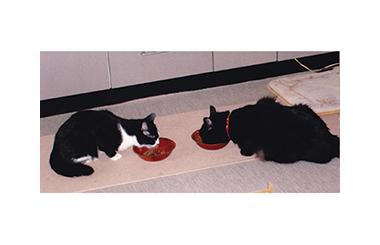 猫が主役の竹本一家(5)最期の日々そして別れ(1)二~子とペロ たけもとのぶひろ – 月刊極北