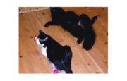 猫が主役の竹本一家(2) ファミリーに新顔参入――京都編 たけもとのぶひろ – 月刊極北