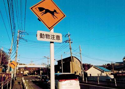 都道を歩いていくとこんな標識が。東京にいることを忘れる